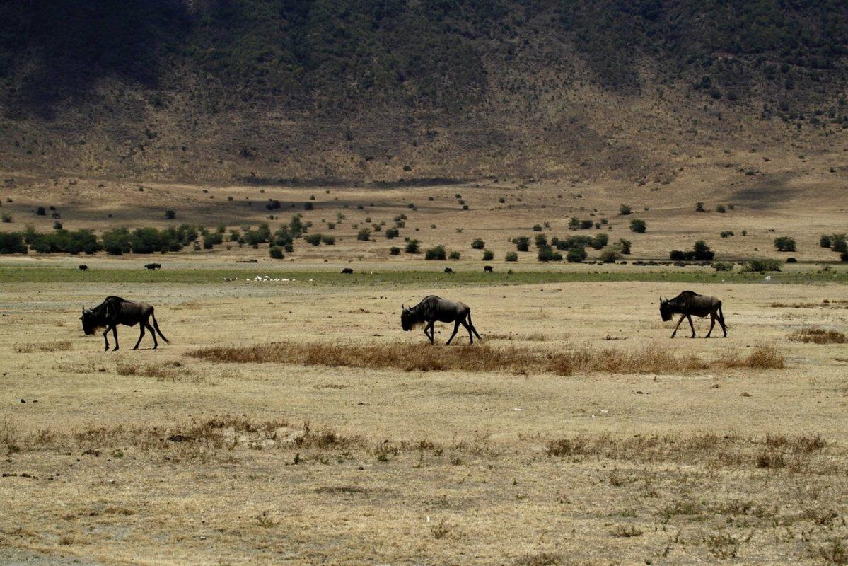 Les meilleurs objectifs pour la faune, le sport, les oiseaux et la photographie d'action