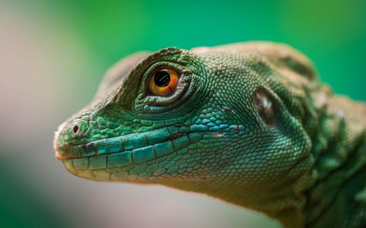Les meilleurs objectifs pour la macro photographie, d'animaux, d'objets et d'insectes