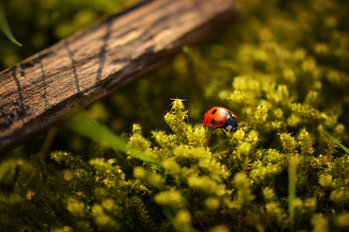 Les meilleurs objectifs pour la photographie de macro, de produit et d'insectes