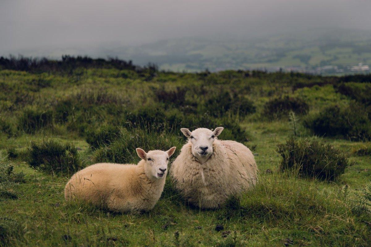 MEILLEUR TÉLÉOBJECTIF POUR LA PHOTOGRAPHIE ANIMALIERE ET ACTION